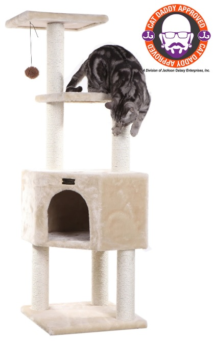 cat climbing on cat tree